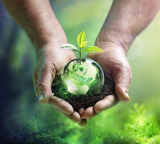 Earth with plant growing in hands